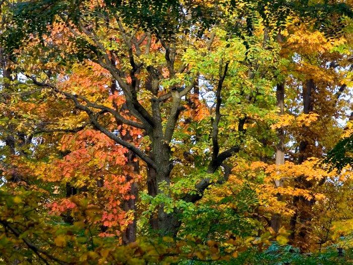Jesień w Lasku Wolskim