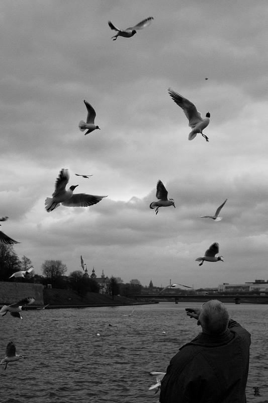 Karmienie ptaków nad Wisłą