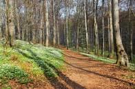 Wiosna w Lasku Wolskim